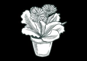 Alberi per giardino vicenza