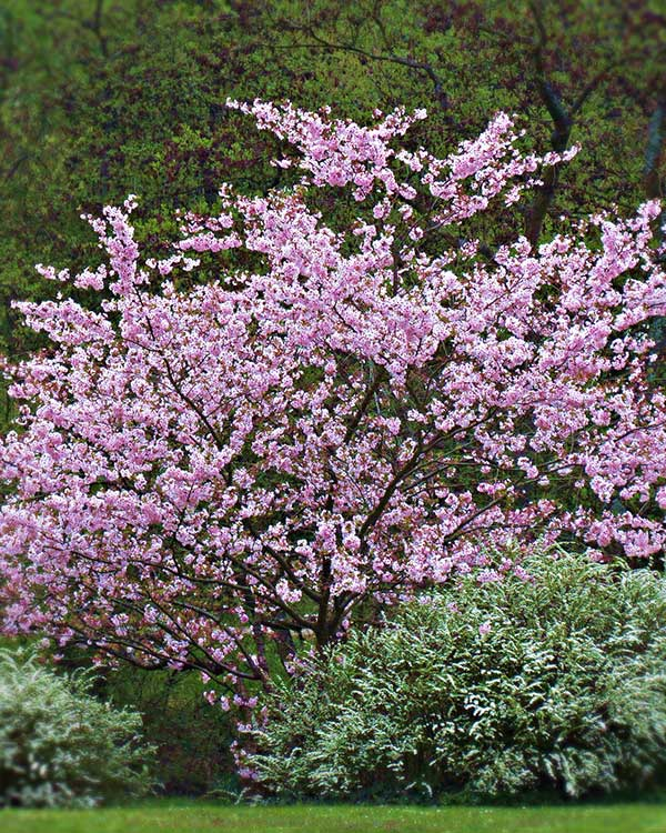Vivaio vendita arbusti da fiore provincia vicenza