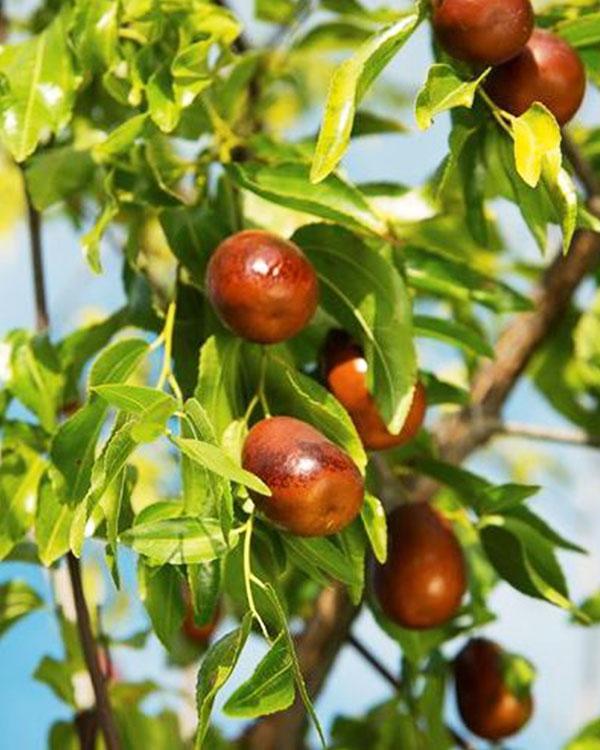 Alberi da frutto in provincia di vicenza