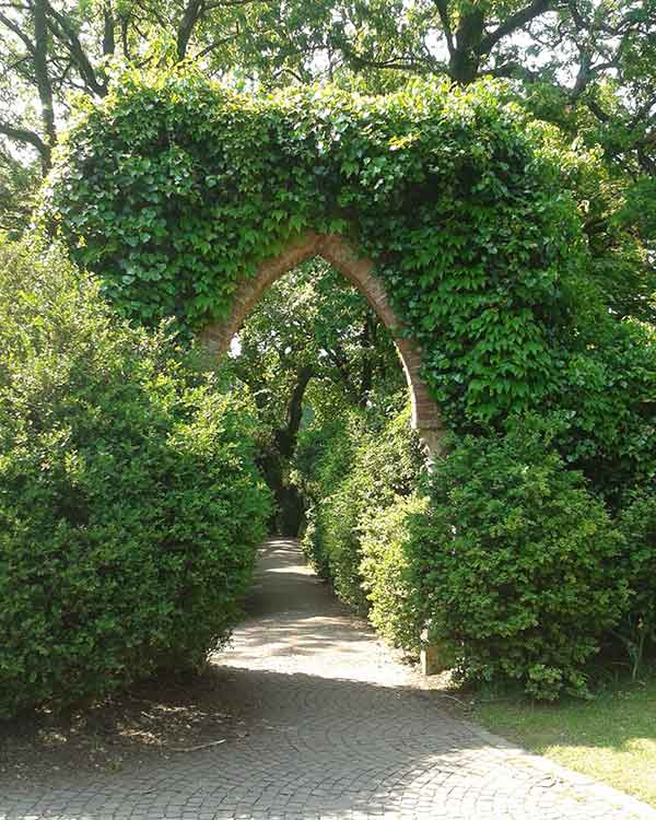 Vendita arbusti e cespugli a vicenza e provincia vivaio for Piante da frutto rampicanti