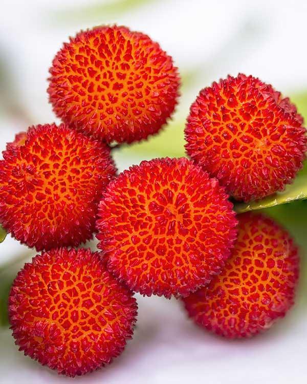 Vivaio piante con frutti esotici provincia vicenza