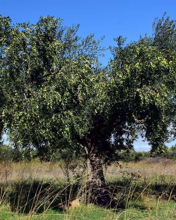 Vivaio piante del mediterraneo vicenza