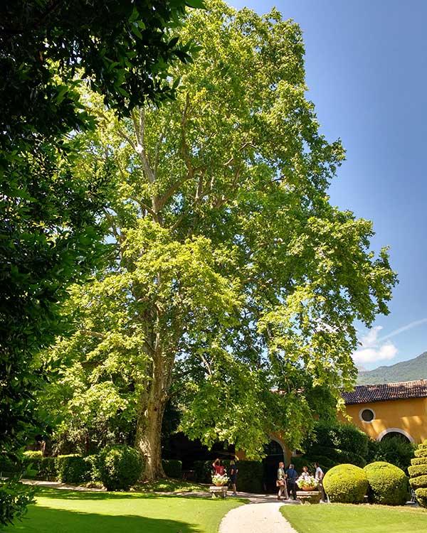 Vivaio vendita alberi caducifoglia provincia vicenza