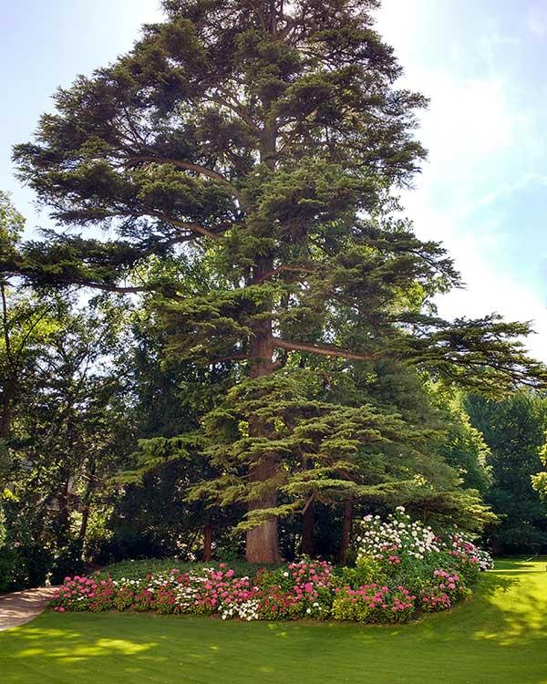 Vivaio vendita alberi sempreverdi provincia vicenza