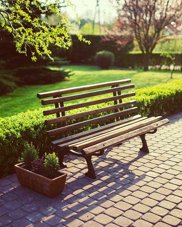 Vivaio vendita siepi per giardino provincia vicenza
