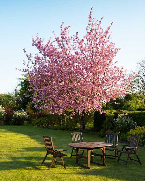 Vivaio vicenza per progettazione giardino
